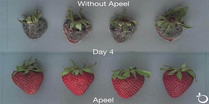 apeel-schutzhuelle-erdbeeren-haltbar.jpg
