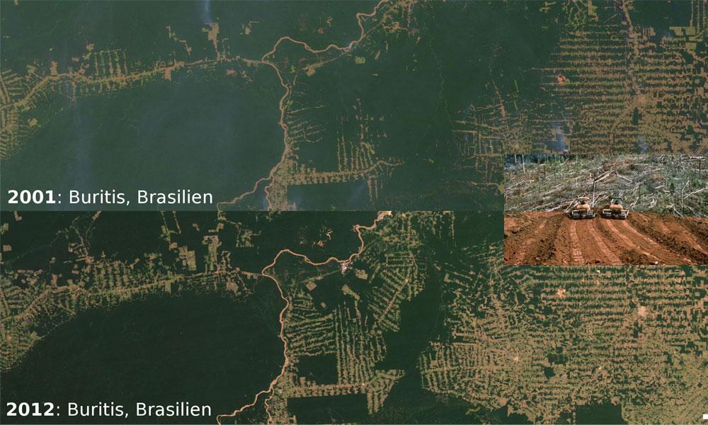brasilien-abholzung-amazonas.jpg