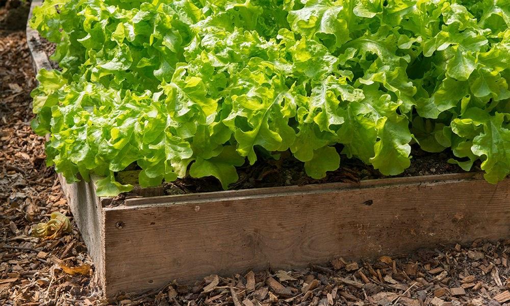 Hochbeete---für-ein-bequemes-Gärtnern.jpg