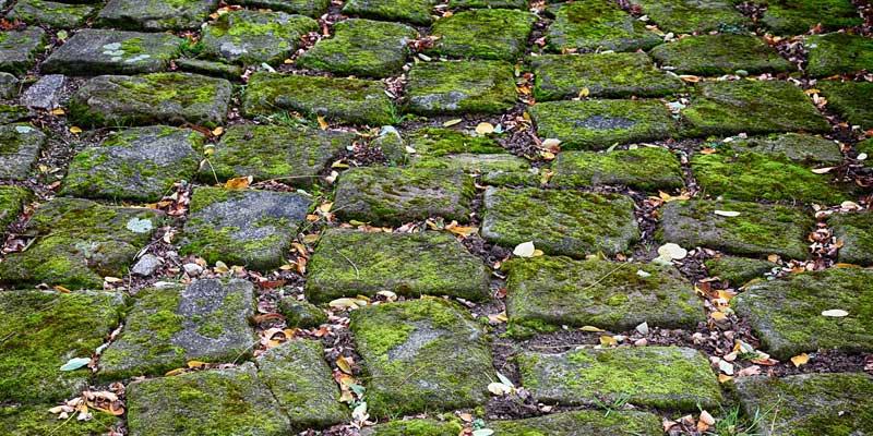 stein-pflaster-moos.jpg