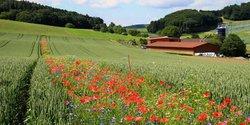 wildblumen-bluehstreifen-acker.jpg