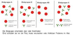 blutgruppe-coronavirus-antikoerper.jpg