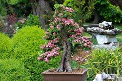 japanischen Garten.jpg