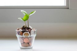 geld-gedeiht-pflanze.jpg
